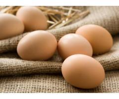 Куплю инкубационные яйца